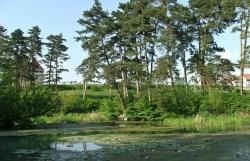 Rezervatia naturala Paraul Peta