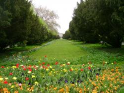 Atractie Turistica - Parcul Cismigiu - Bucuresti - Centru Turistic