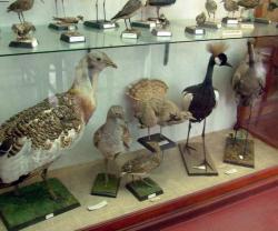 Atractie Turistica - Muzeul Zoologic - Cluj Napoca - Centru Turistic