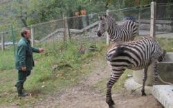 Atractie Turistica - Gradina Zoologica - Oradea - Centru Turistic