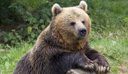 Atractie Turistica - Rezervatia de Ursi - Zarnesti - Centru Turistic