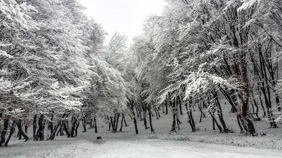 Atractie Turistica - Padurea Hoia - Baciu - Centru Turistic