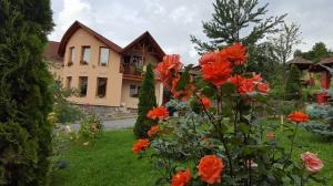 Cazare - Pensiunea Moldovan - Praid